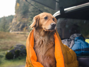 Hiking & Camping With Your Dog