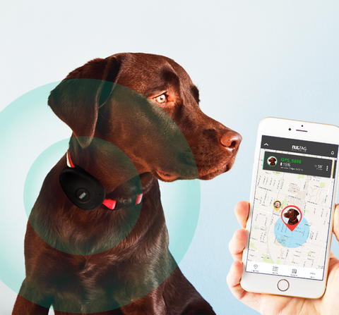 <b>SEEK</b> Pets GPS<br/><span>Telstra Included (1 yr)</span>