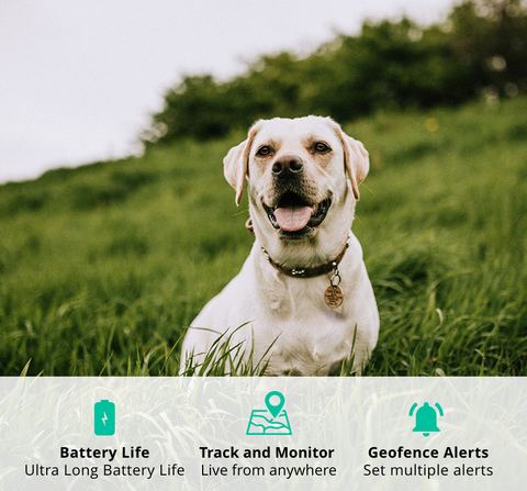 <b>SEEK</b> Pets GPS<br/><span>+ collar attachment (Telstra service included)</span>
