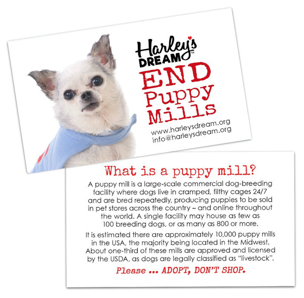 Puppy Mill Awareness Cards - Teddy (200 pk)