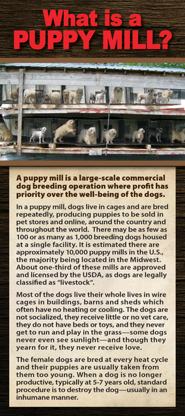 What is a Puppy Mill - (50 pk) Rack Card / Brochure