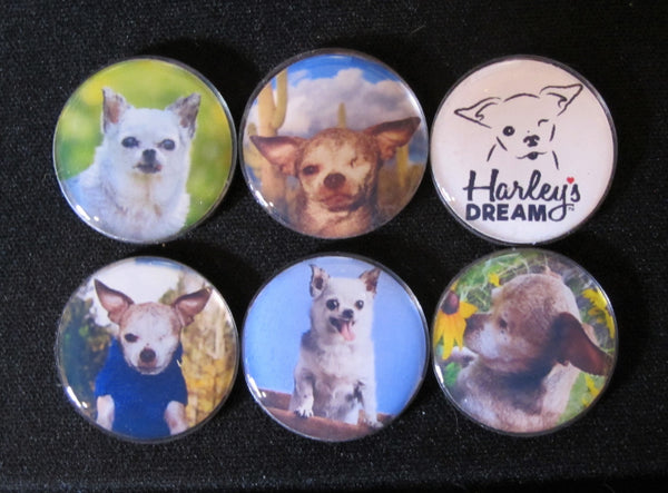 Harley's Dream Collectible Photo Magnets
