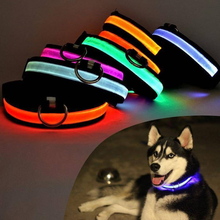 LED Glow in the Dark Dog Cat Collar Nylon - USB Rechargeable - Exotic Land Imports