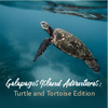 Galapagos Island Adventures; Turtle and Tortoise Edition