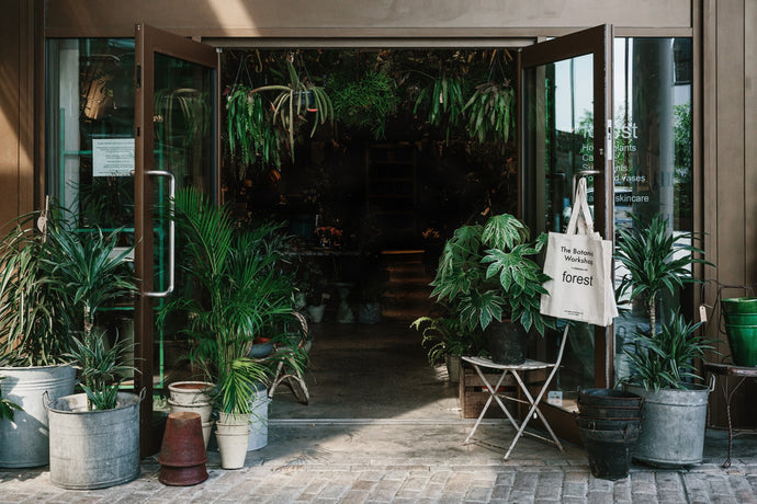 Our New House Plant Shop