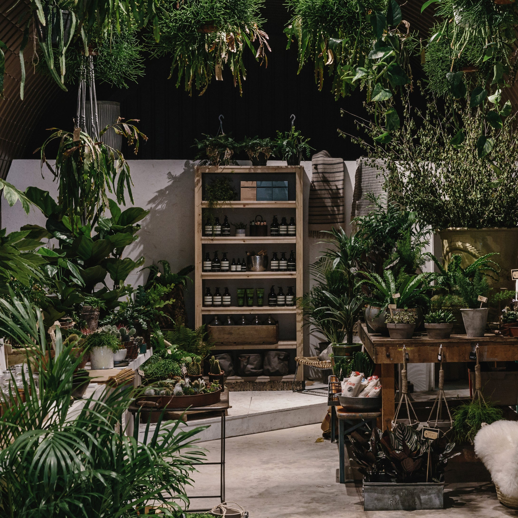 Forest East Dulwich Deptford London House Plants Homeware