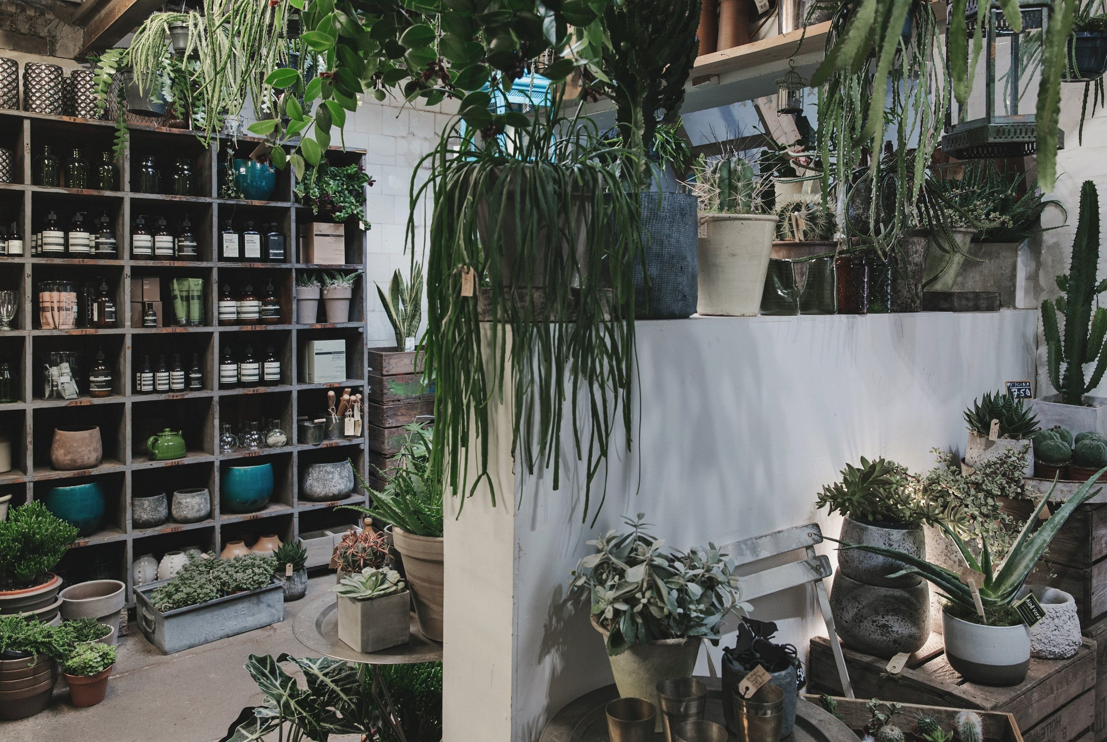 Come and visit us in store in East Dulwich or Deptford and discover the joy plants can bring to your home.