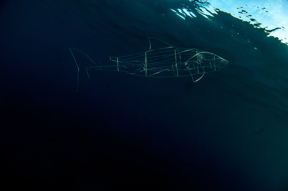 underwater wire shark