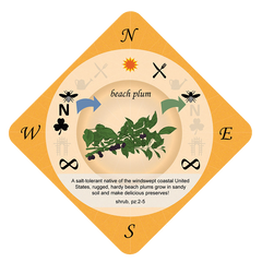 Beach plum playing card - Food Forest Card Game