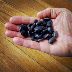 Scarlet runner beans dried