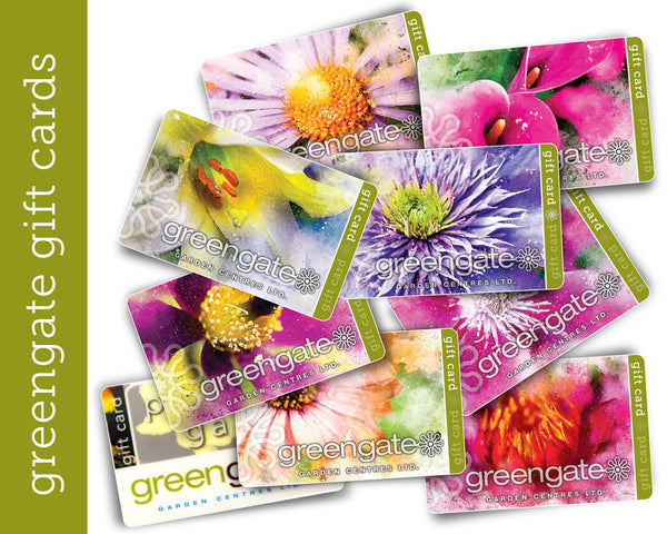 "Peach ""Osteospermum"" Image - greengate Gardening Gift Card with card holder"