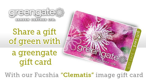 "Fuchsia ""Clematis"" Image - greengate Gardening Gift Card with card holder"