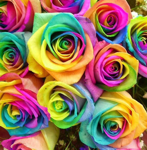 Rainbow Rose Hand Tied