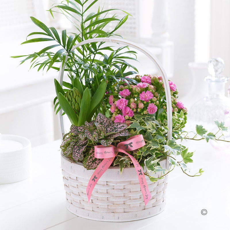 Mother's Day Planted Basket