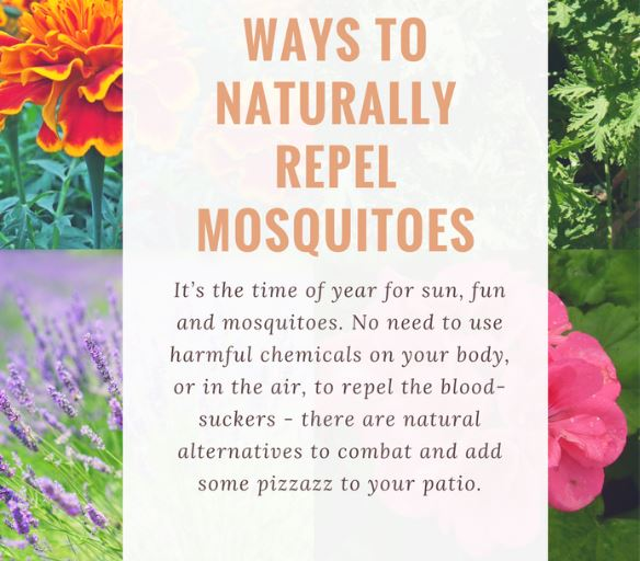 Naturally Repel Those Nasty Mosquitoes