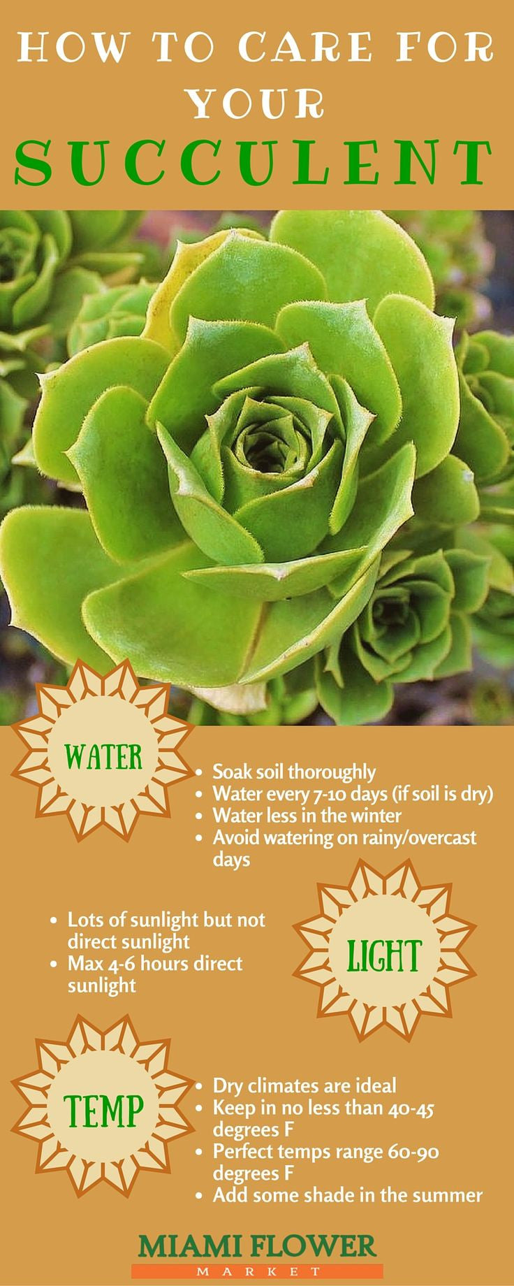 How To Care For Your Succulent
