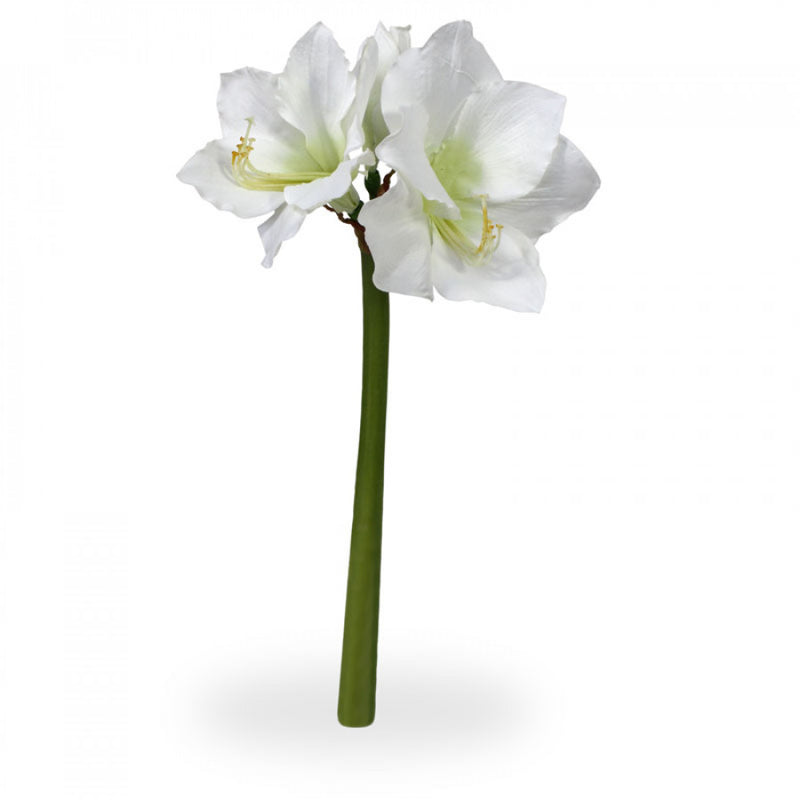 Amaryllis (Please call for Availability)