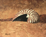 Beach Striped Nautilus