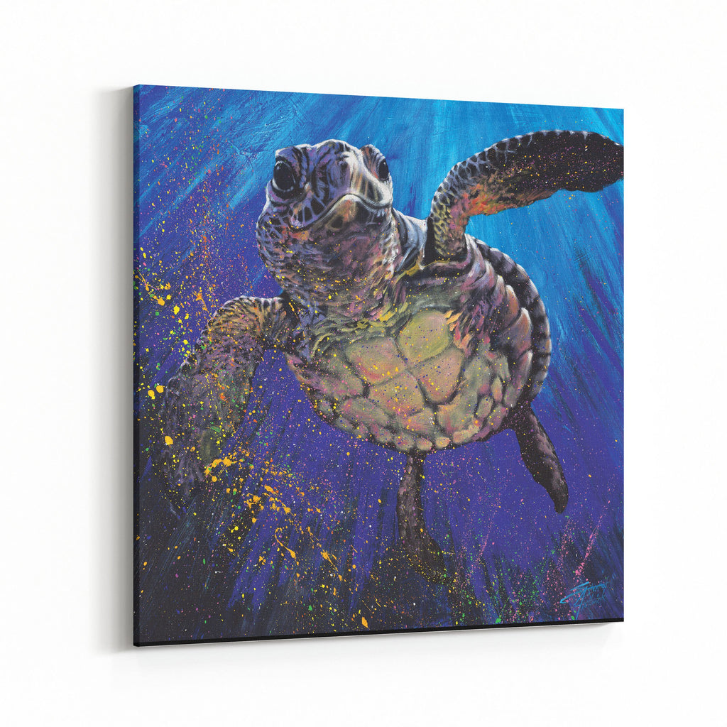 Kemps' Ridley Turtle by Stephen Fishwick Canvas Art