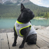 DOG COOLING VEST *NOW IN STOCK