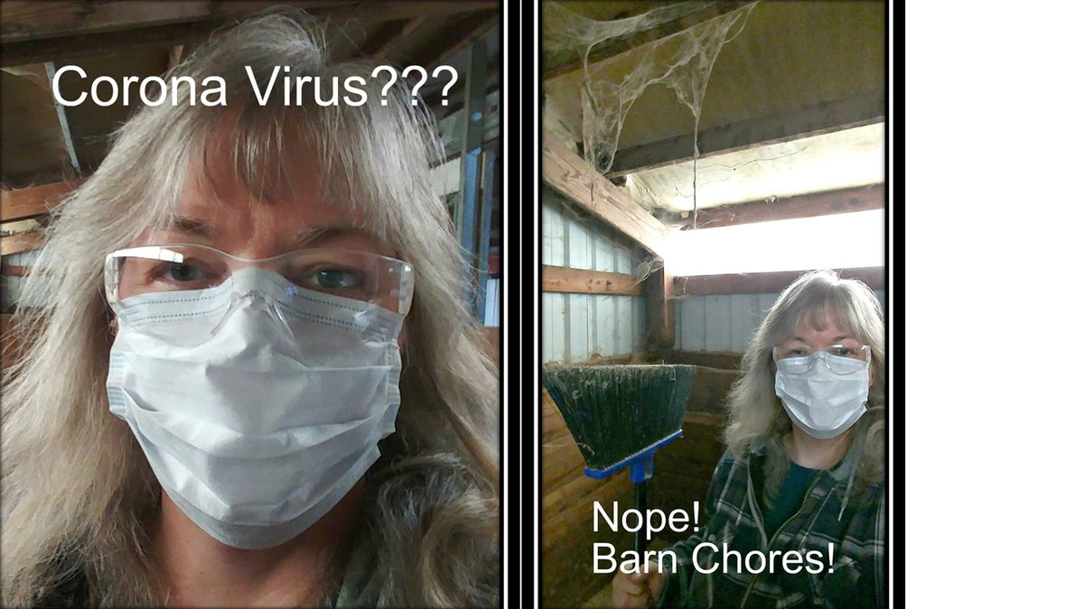 "Barn Chores, Max and the ""Virus"""