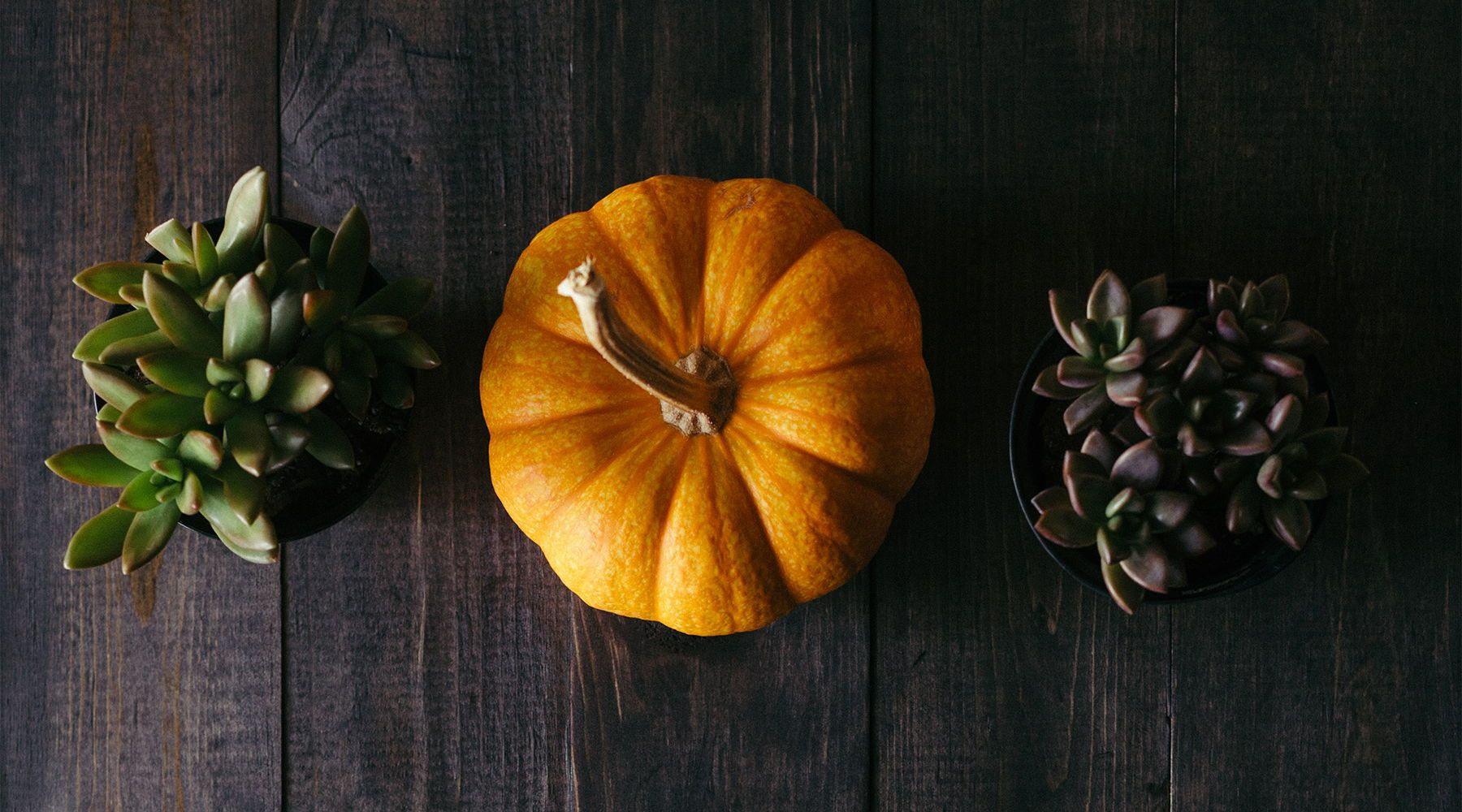Earth-Friendly Ways To Celebrate Halloween