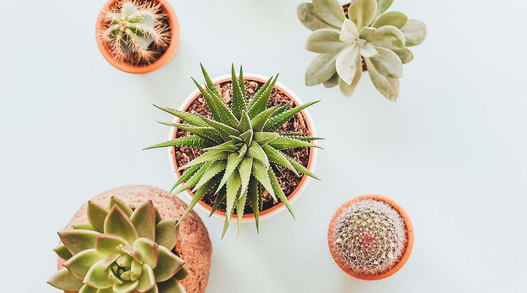 How To Keep Your Plants Alive In The Winter
