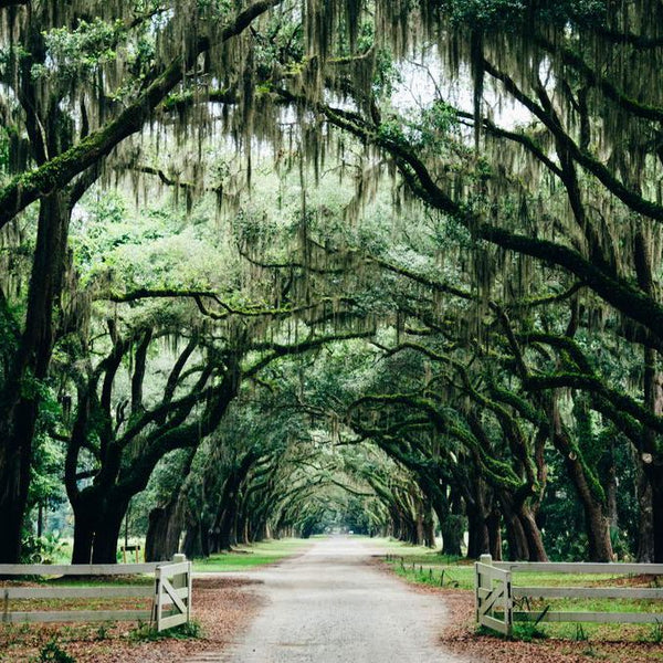 Wildsam Travel Field Guide: American South