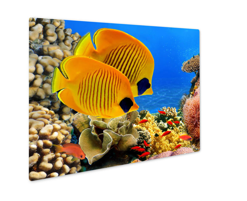Metal Panel Print, Photo Of A Coral Colony