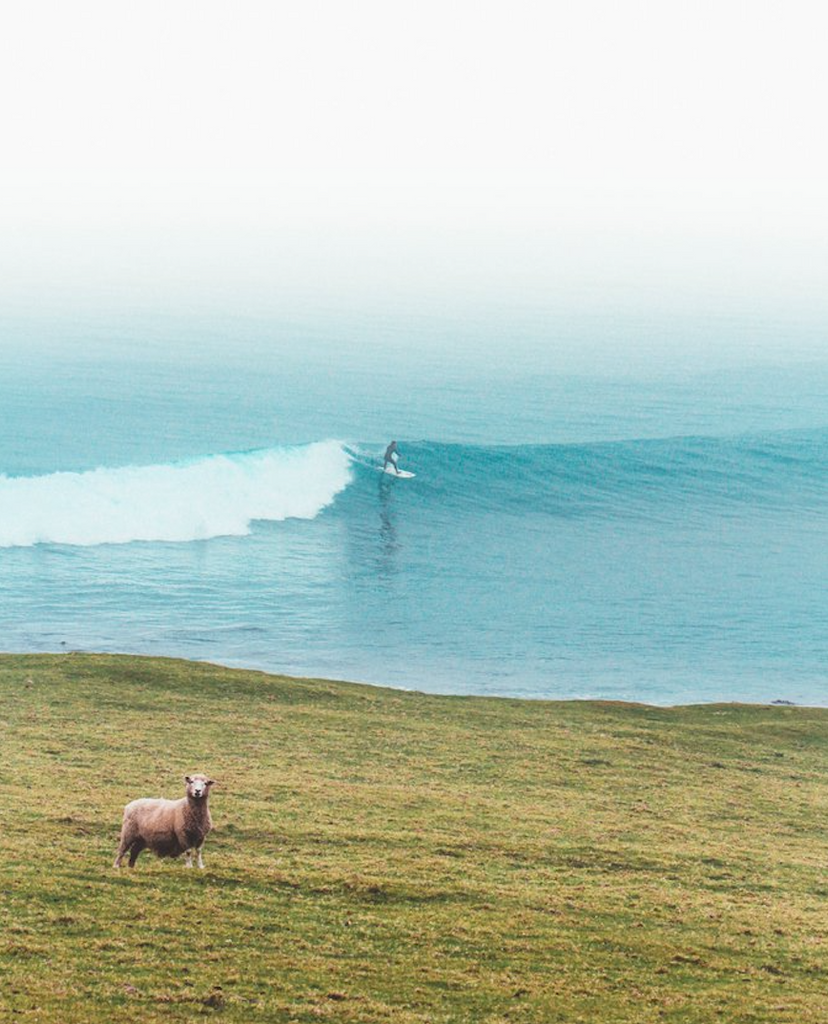 Surfing With Animals by Luke Fraser
