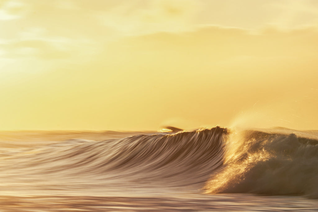 Golden Morning by Shayne Stadnick