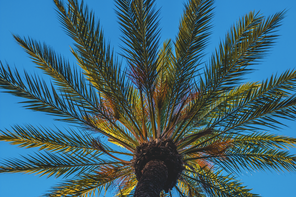 Palm Tree by Sean Curran