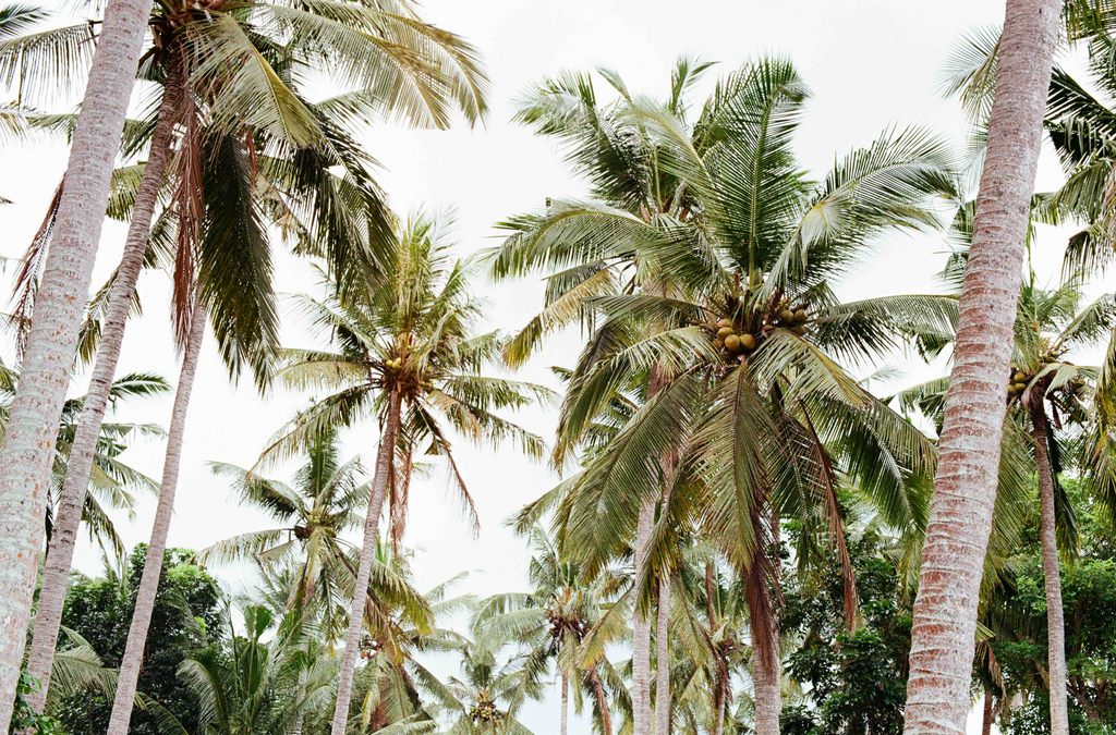 Under The Palms by Josh Evans