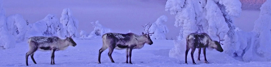 Things to do in Lapland