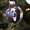 Your Pet Glass Ornaments