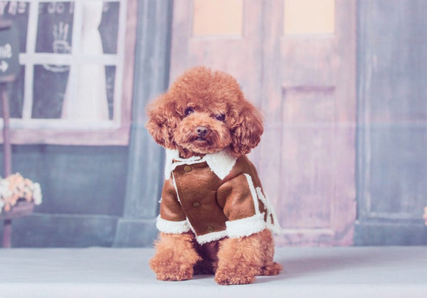 Small dog thick fall and winter brown jacket Coats - DogTrunk