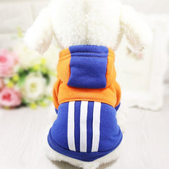Sporty Bright Dog Hoodie