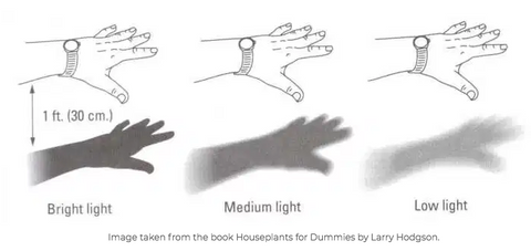 Sketch of types of shadows to determine what kind of light you have