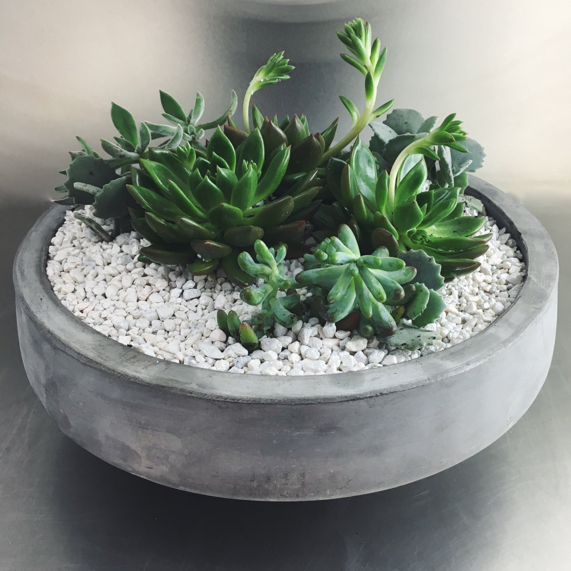 Large succulent garden in a low cement bowl with white pebbles.