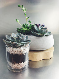 Single succulent plant in glass container and succulent garden in low cement bowl.