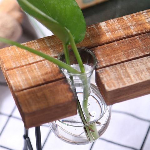 Image of Plant Clear Glass Terrarium