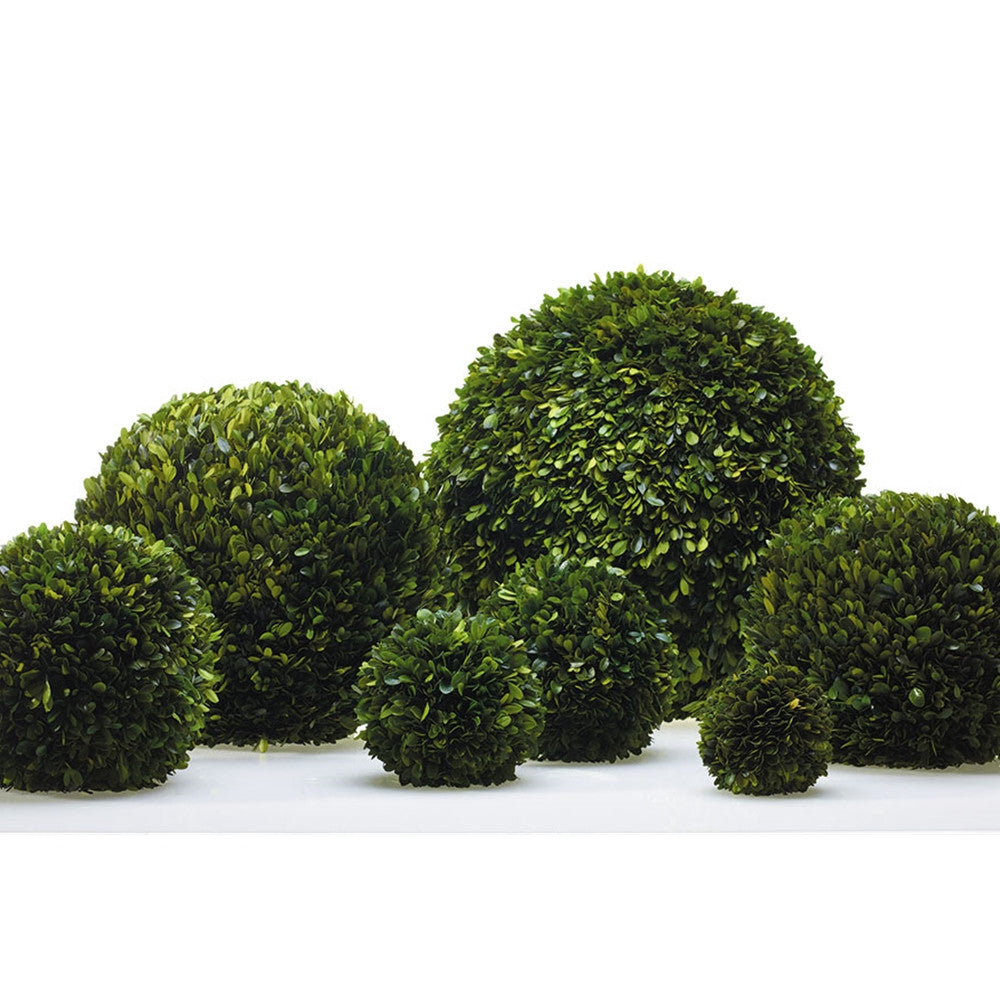 Boxwood Spheres