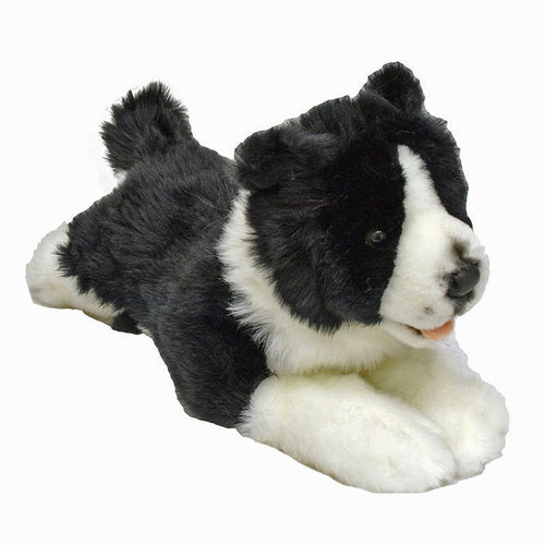 Border Collie - Patch