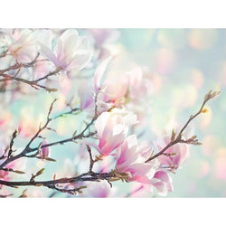 'Spring Cherry Blossom' photographic Canvas