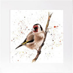 'Gordon Goldfinch' framed print by Bree Merryn