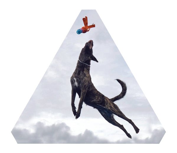 Dog Jump End Cap