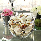 CYS EXCEL Sea Shells Mixed Colorful Beach Seashells, Natural Seashells Perfect Accents for Nautical Decor,Home Decor, Beach Theme Party Wedding Decoration, DIY Crafts and Vase Fillers
