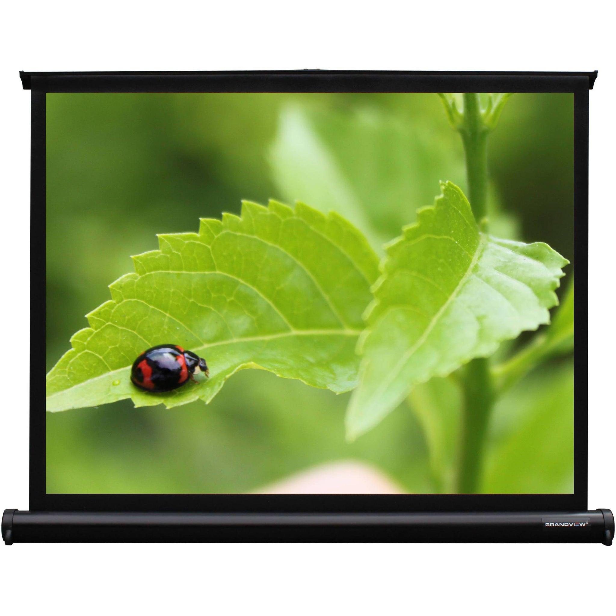 "Grandview U-Work 40"" Table-Top Projection Screen"