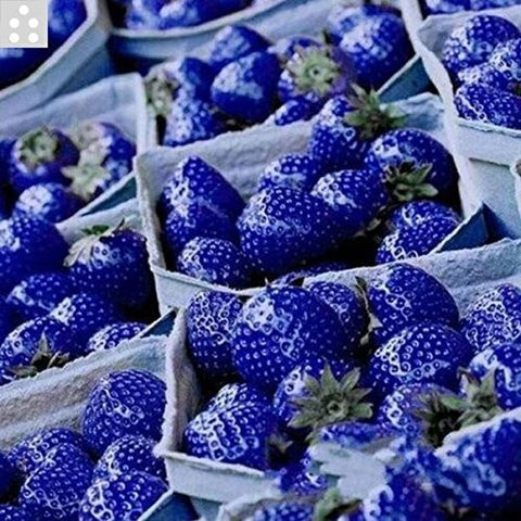 Image of Blue Strawberry Seeds