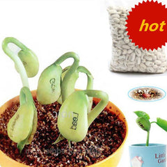 50  Magic Message Bean Seeds